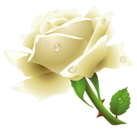 White Roses PNG - 16413