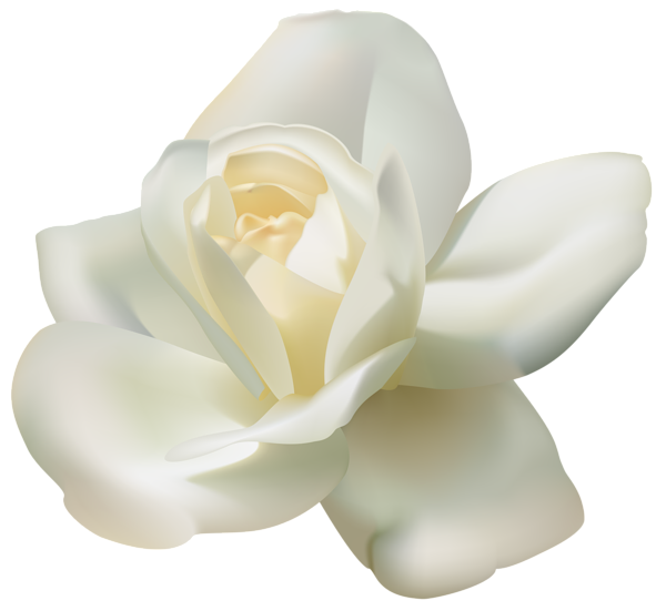 PNG File Name: White Rose PNG - White Roses PNG