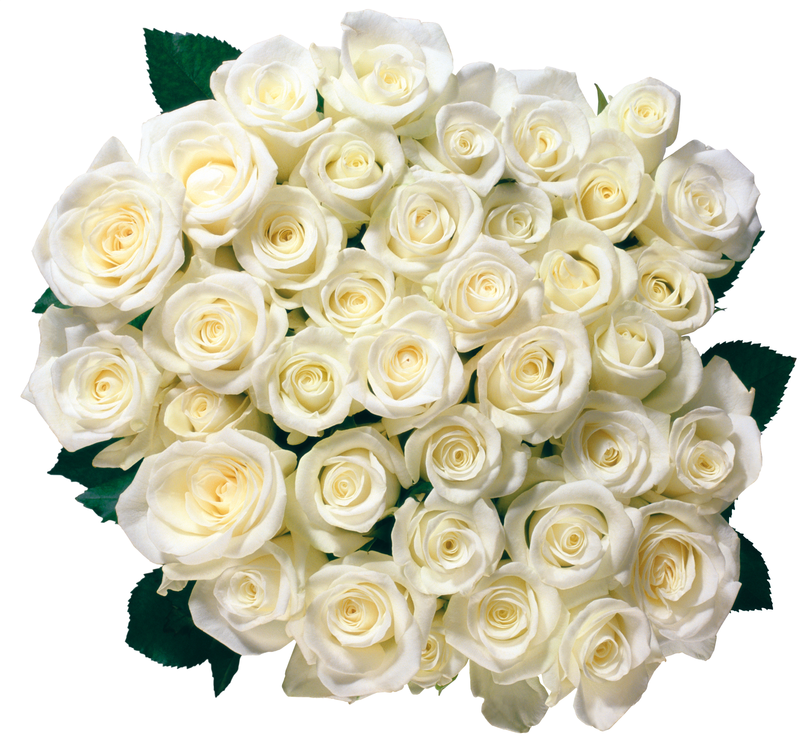 White Roses PNG - 16408