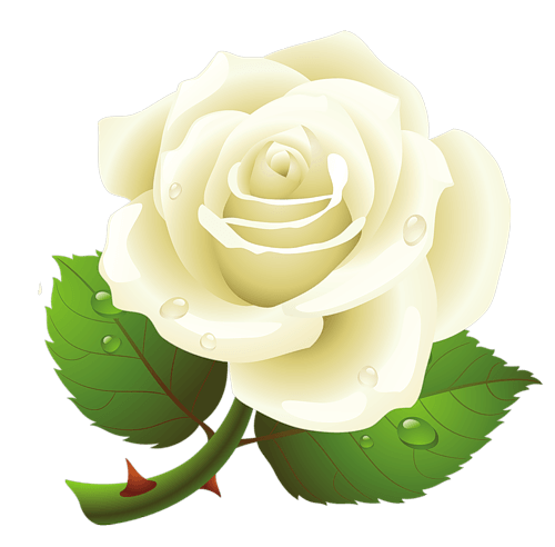 White Roses PNG - 16405