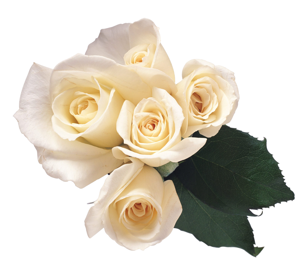 White Roses PNG - 16407