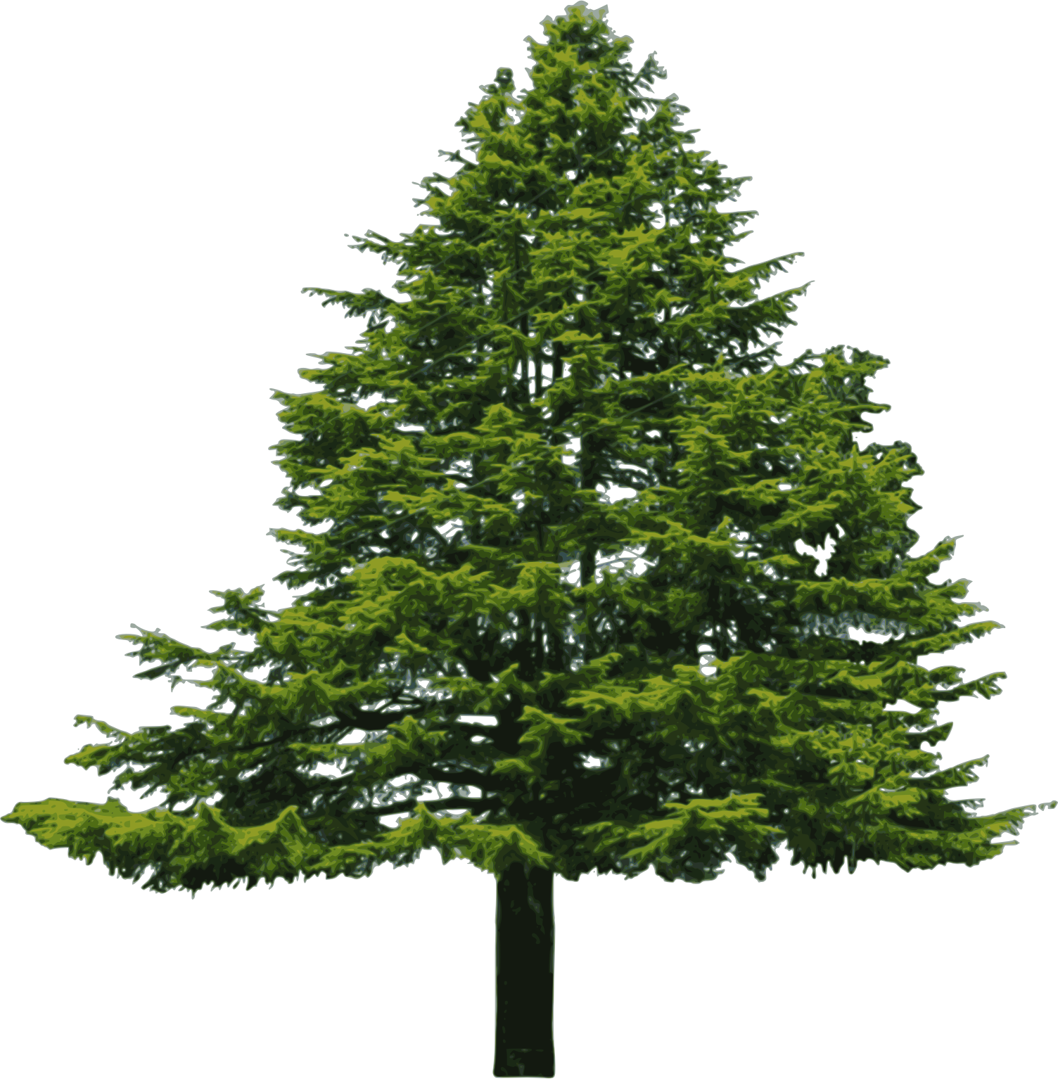 Wide Tree PNG - 55249