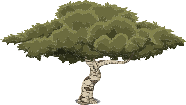 Wide Tree PNG - 55238