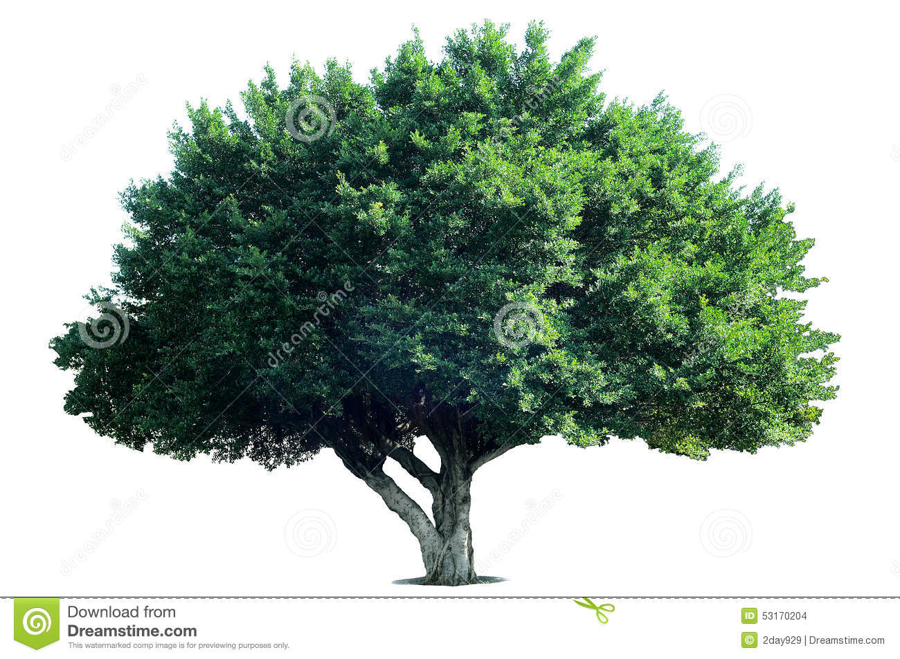 Royalty-Free Stock Photo - Wide Tree PNG