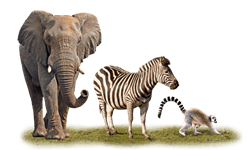 African animals and the animal themed free play slots - Wild Animals PNG