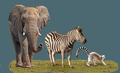 Wild Animals PNG - 160507