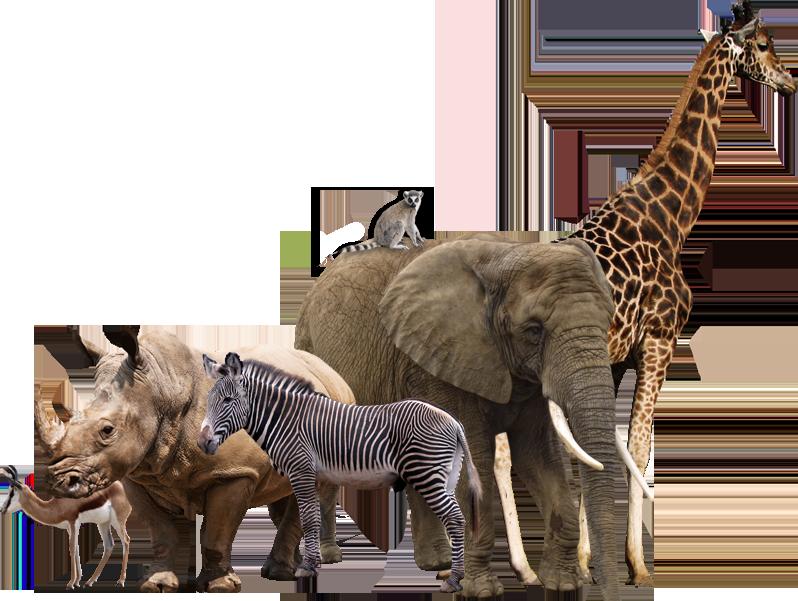Wild Animals PNG - 160490