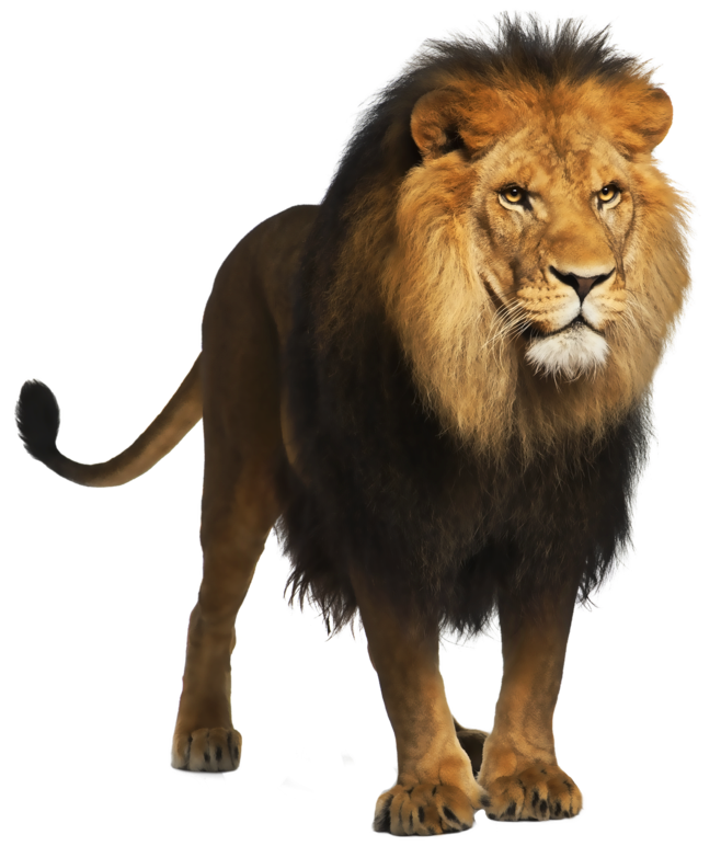Animal · Lion PNG Picture - Wild Animals PNG