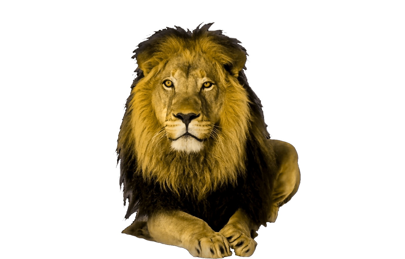 animals clipart png,cartoon animals png,cute animal png,wild animals png, animals  png image, cute animal png (17) - Wild Animals PNG