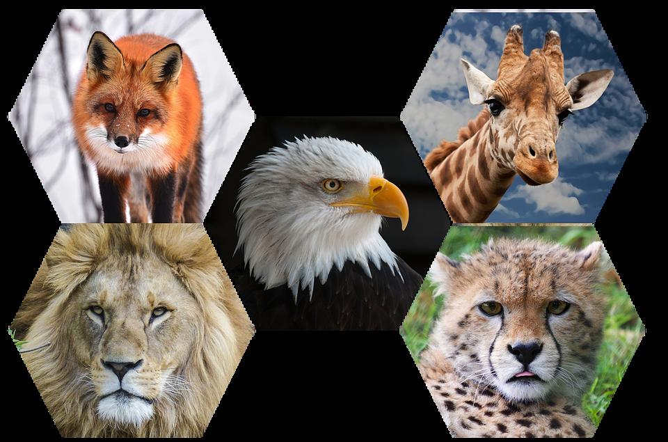 Wild Animals PNG - 160502