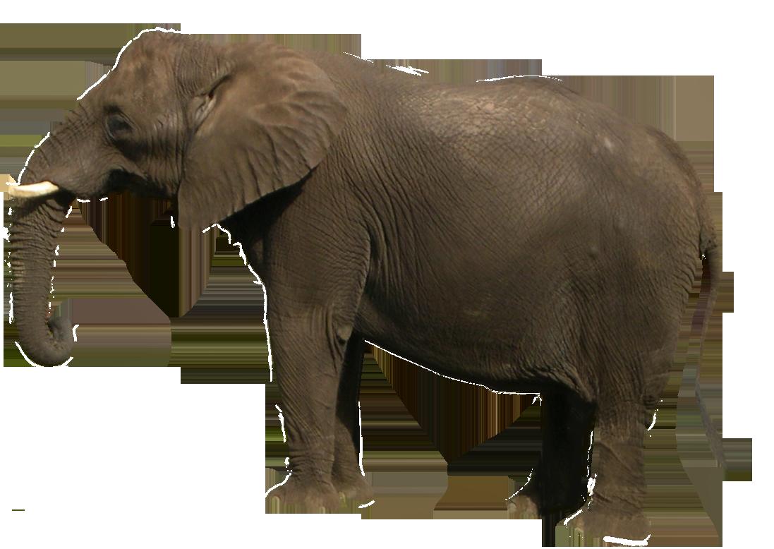 Wild Animals PNG - 160494