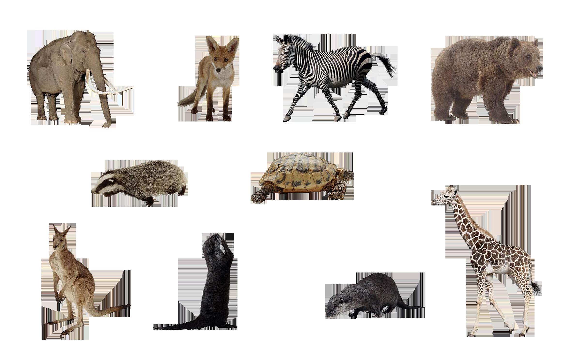 Wild Animals PNG - 160493
