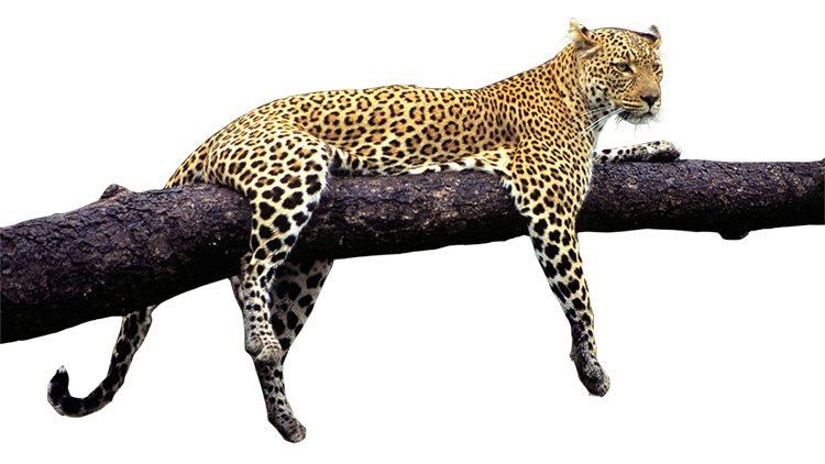 Wild Animals PNG - 160495