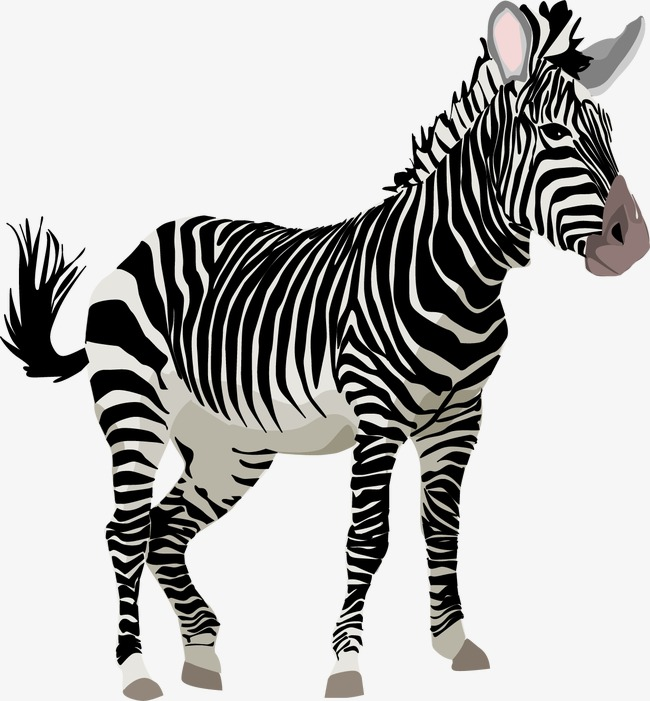 zebra vector, Zebra, Animal, Wild Animals PNG and Vector - Wild Animals PNG