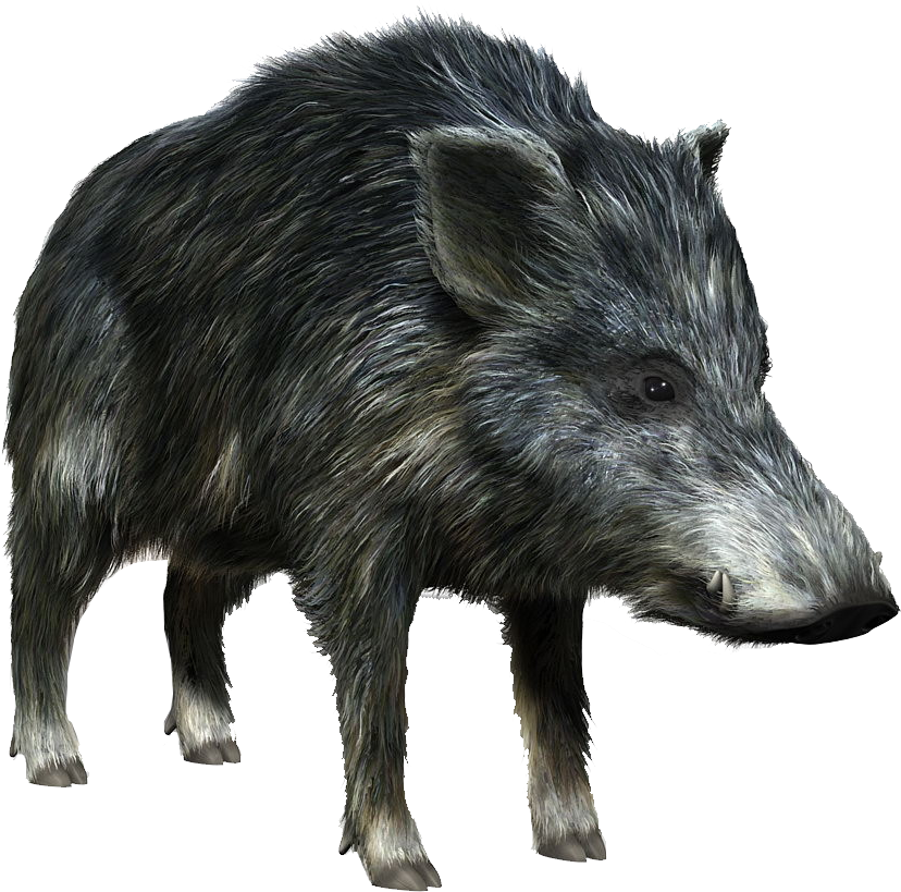 Wild Boar Additional Variants