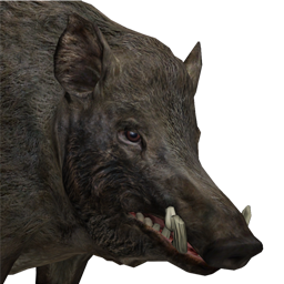 File:Wild boar male common.png - Wild Boar PNG HD