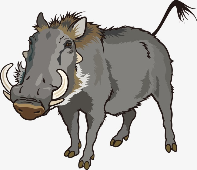 Vector wild boar, Cartoon Animals, Vector Animals, Animal Free PNG and  Vector - Wild Boar PNG HD