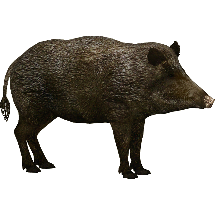 Wild Boar PNG HD