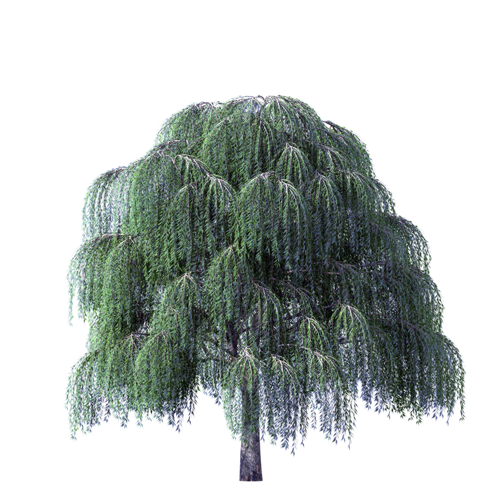 Willow Tree PNG HD-PlusPNG.com-1024 - Willow Tree PNG HD