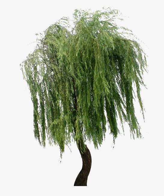 Willow Tree PNG HD - 130443