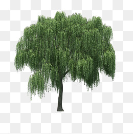 Landscape foreground tree, Landscape, Landscape Tree, Foreground Tree PNG  and Vector - Willow Tree PNG HD