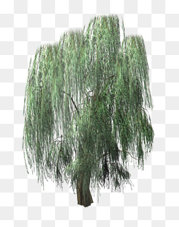 Lush drooping willow, Willow, Tree Color, A Mood PNG Image - Willow Tree PNG HD