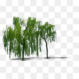 Willow Tree PNG HD - 130441