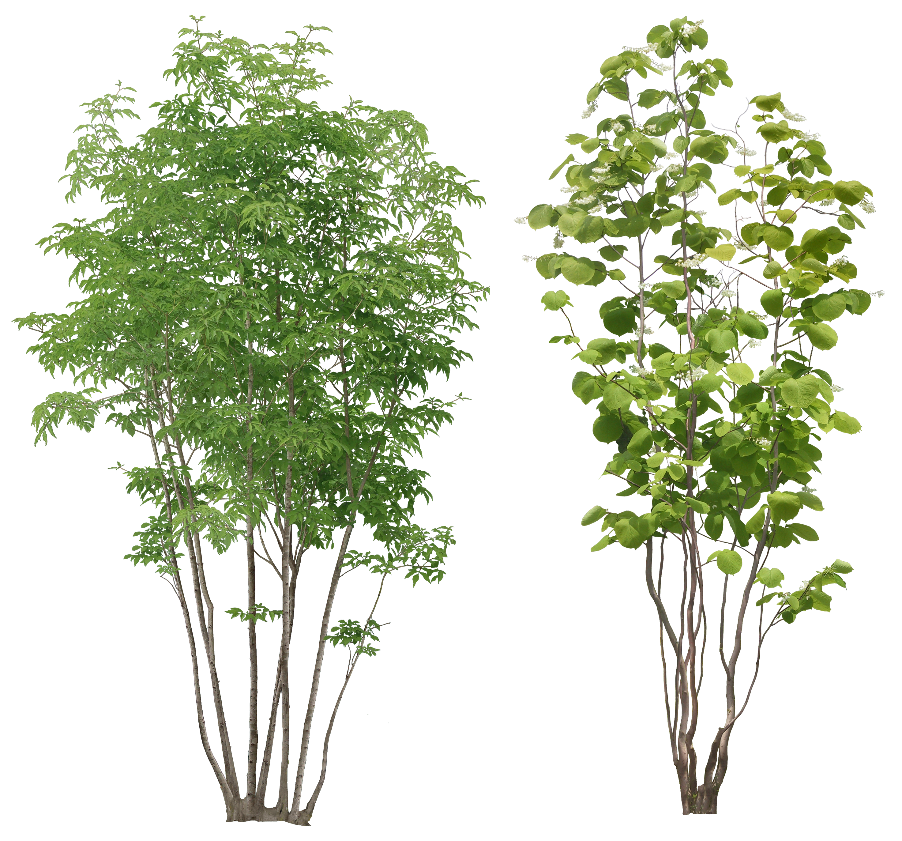 Willow Tree PNG HD - 130446