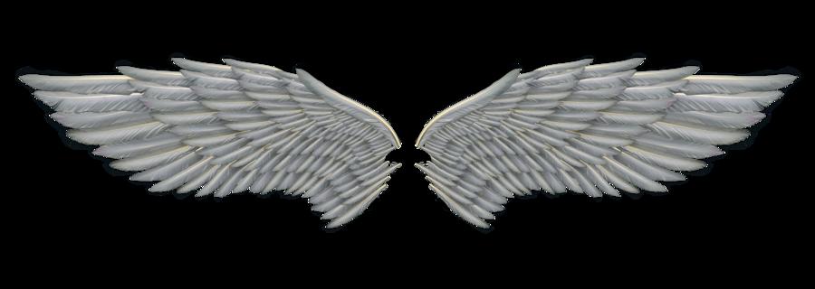 Wings HD PNG - 94833