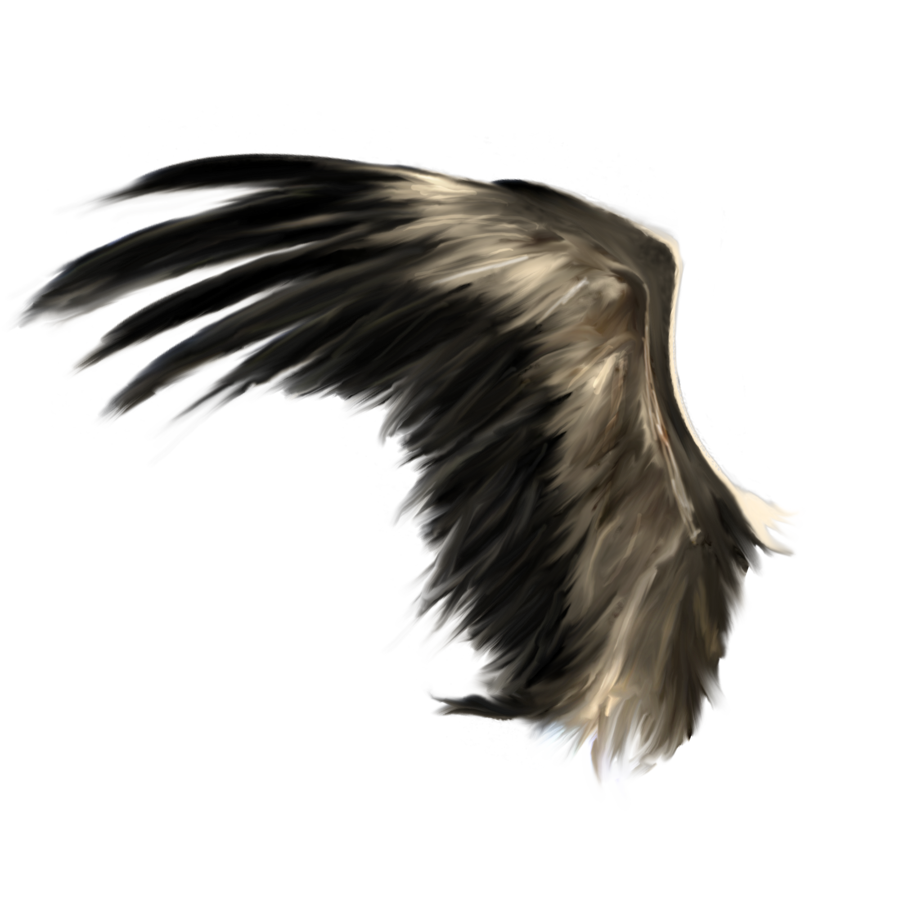 Wings HD PNG Transparent Wings HD PNG Images  | PlusPNG