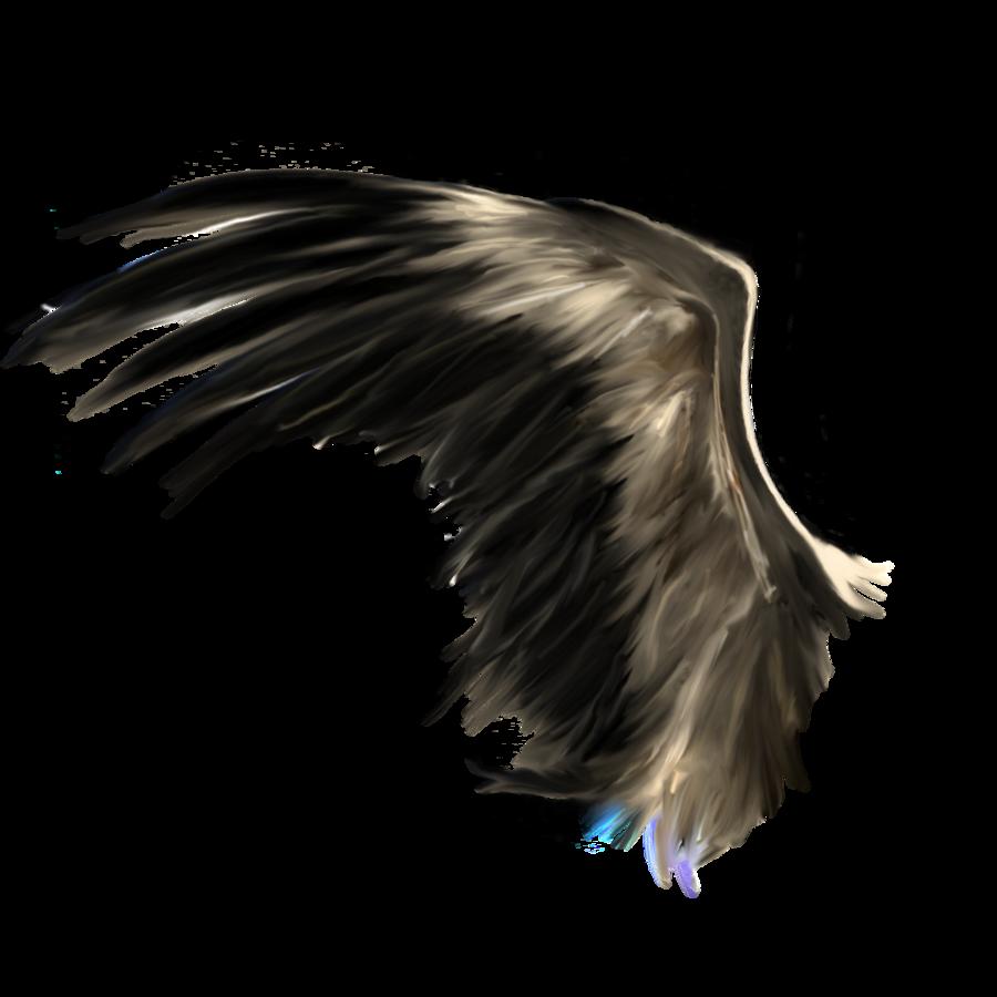 Wings HD PNG - 94843