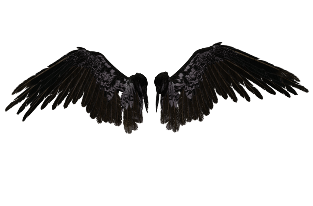 Wings HD PNG - 94836