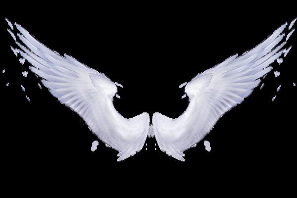 transparent angel wings | Tumblr - Wings HD PNG