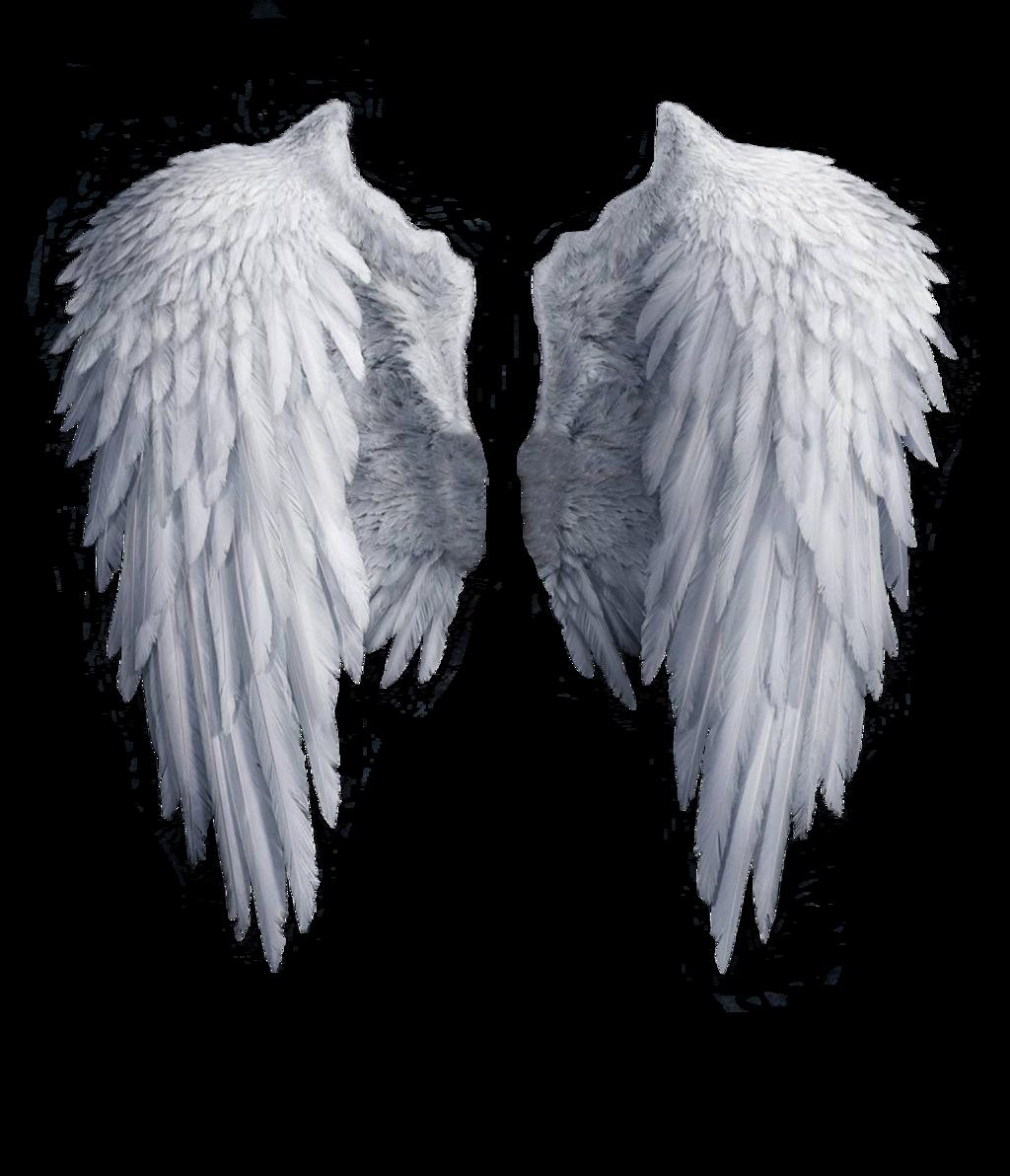 White angel wings PNG - Wings HD PNG