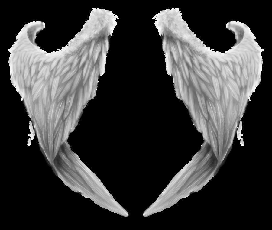 Wings HD PNG - 94839