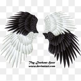 wing,Angel wings,Real wings,Angel wings,Real, Wing, Angel. PNG - Wings HD PNG