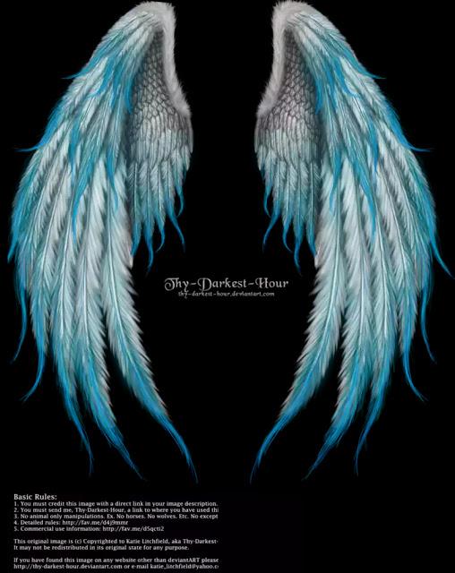 Wings HD PNG - 94829