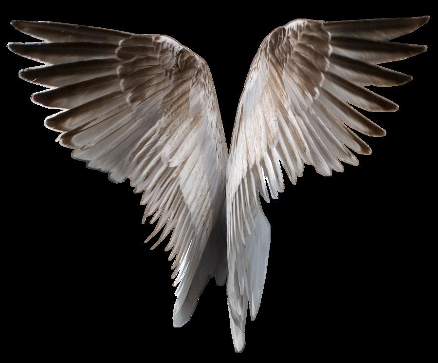 Wings HD PNG - 94830