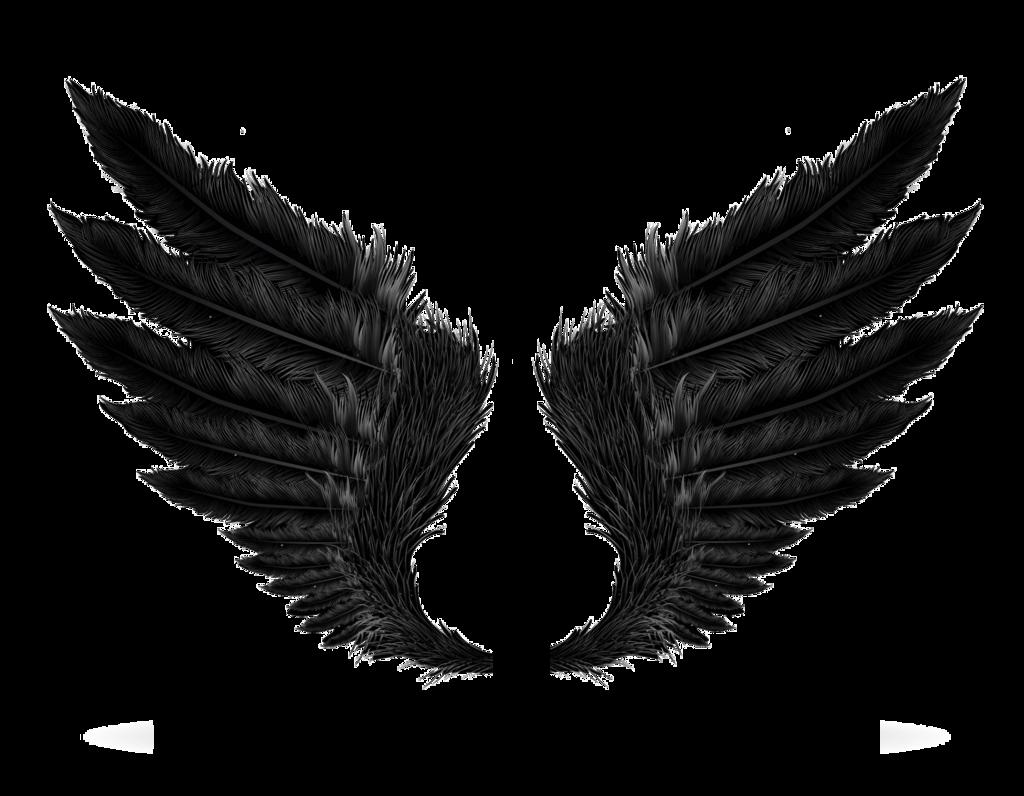 Wings HD PNG - 94826