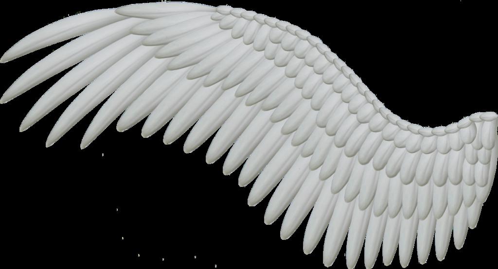 Wings HD PNG - 94828