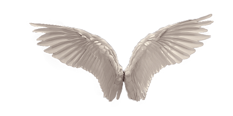 Wings PNG Picture - Wings HD PNG