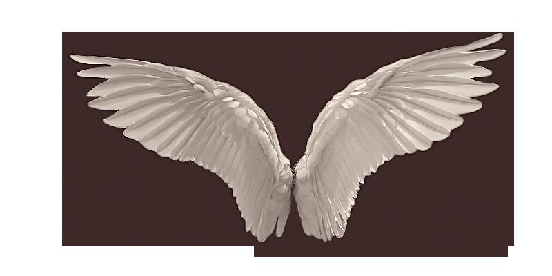 Wings HD PNG - 94832