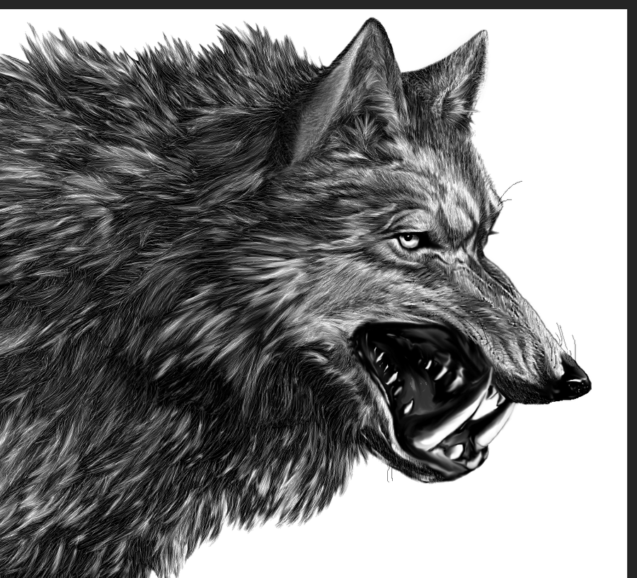 Wolf HD PNG - 91435