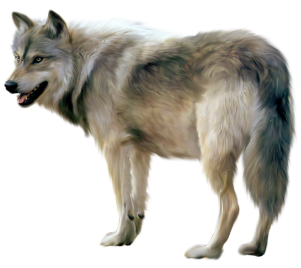 Wolf HD PNG - 91429