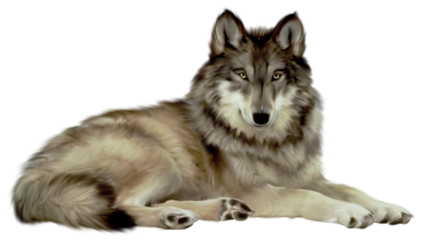Wolf HD PNG
