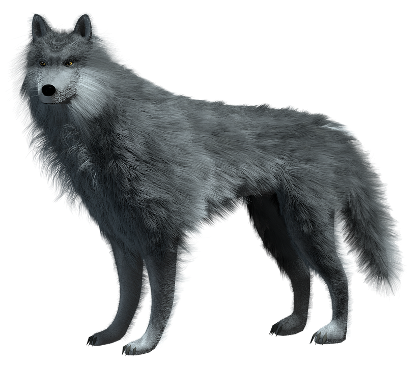 Wolf HD PNG - 91438