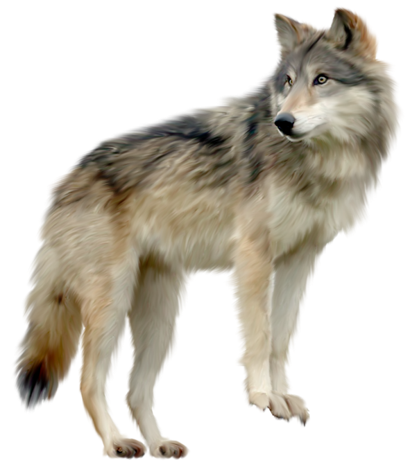 Wolf HD PNG - 91430