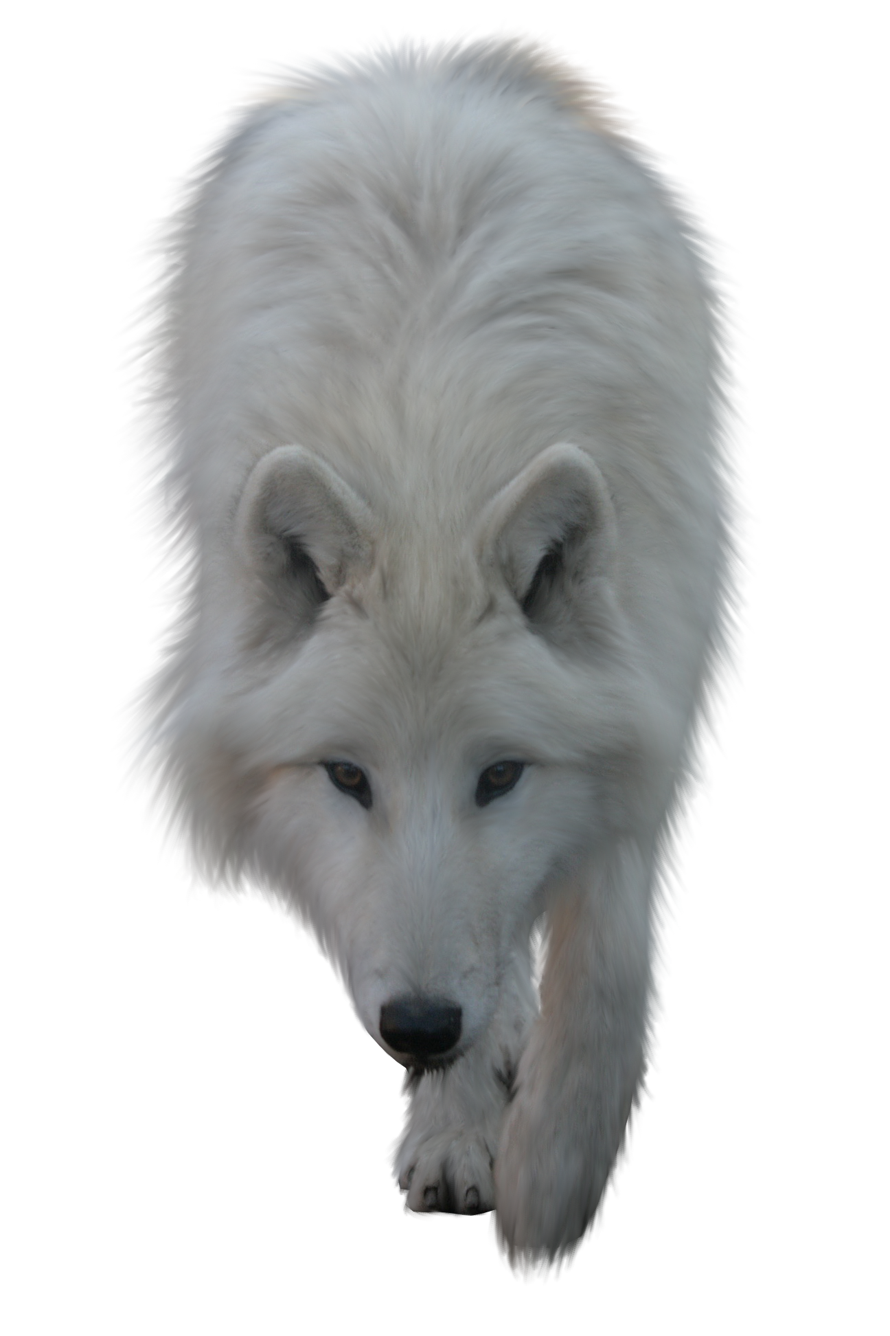 Wolf HD PNG - 91428