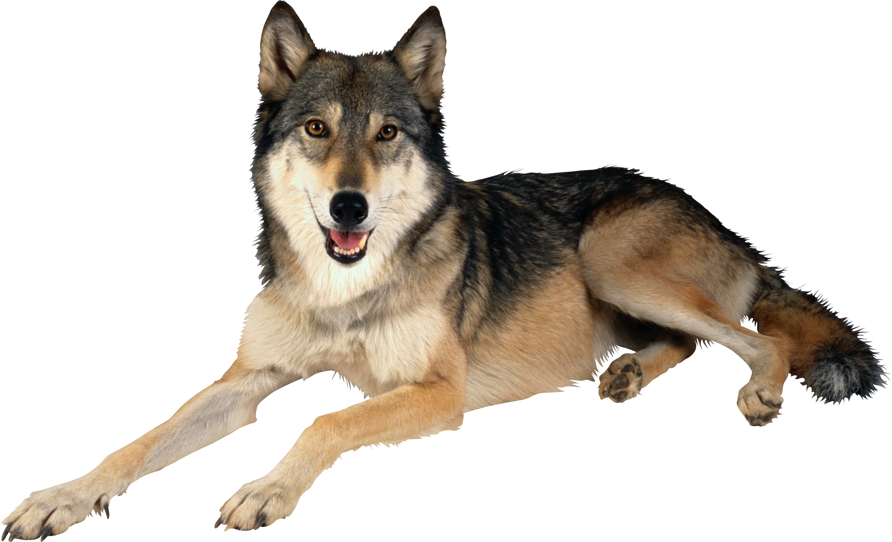 Wolf HD PNG - 91436