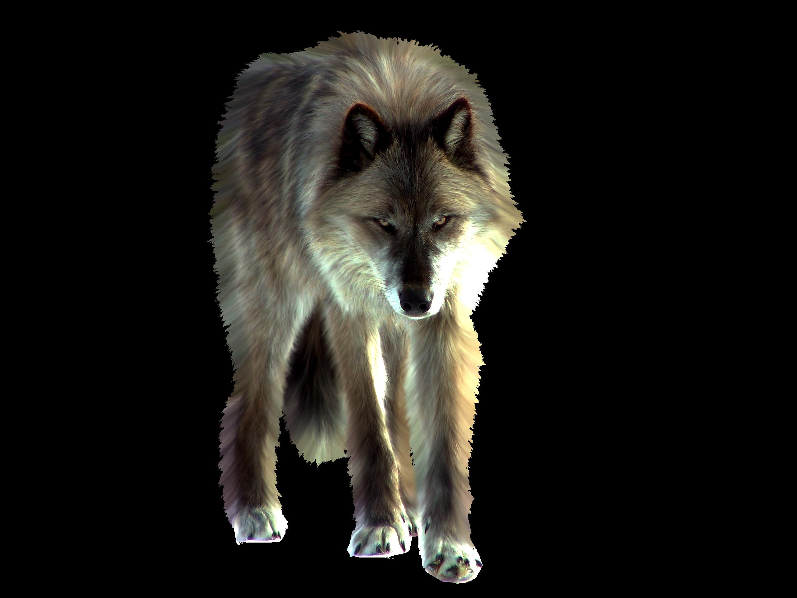 PNG Wolf by ITSDura PNG Wolf by ITSDura - Wolf PNG